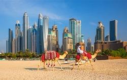 View on Dubai Marina, camels and famous Jumeirah beach in Dubai, United Arab Emirates