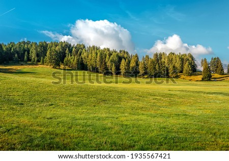 View on green mountain meadow with forest and perfect blue sky on the background. Wonderful nature landscape. Amazing natural Background. Rich Harvest Concept. used as background.