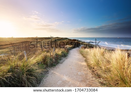 view on sea beach from path on dunes, Netherlands Foto stock ©