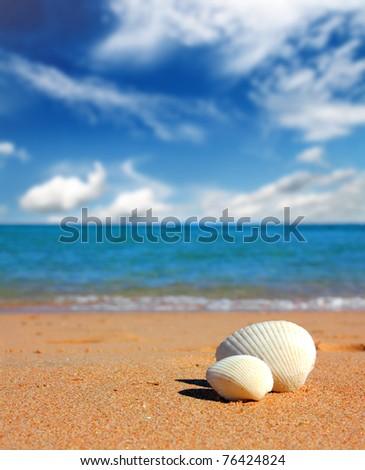 view on seashells on beach near sea