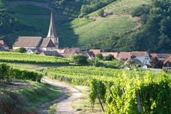 View on the  alsacian vineyard in Sigolsheim - Kientzheim - Kaysersberg form the  Necropolis, World War military cemetery in Alsace -  France in Sigolsheim.