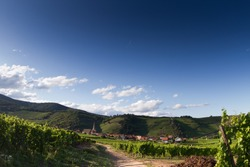 View on the  alsacian vineyard in the summer