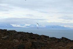 View on the Arctic Ocean from the shores of Spitzberg, Svalbard, Norway. Flight of numerous terns in the horizon and the blue sky. Fjords and glaciers falling in the Arctic Ocean.