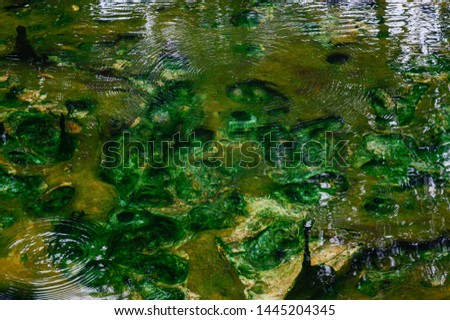 View on the bottom of one of the natural pools at Pong Arng Hot Spring, Pha Daeng National Park, Chiang Mai Province, Thailand