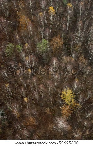 View on the trees of the autumn forest from above.