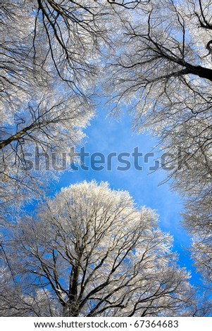 view on top frozen trees