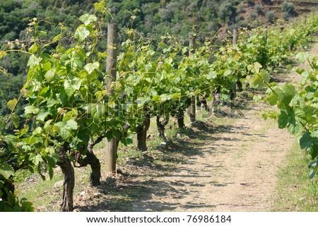 view on vineyard