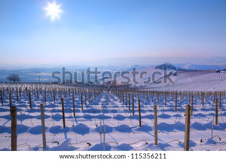 View on vineyards on snowy hills under clear blue sky with shining sun at winter in Piedmont, Northern Italy.