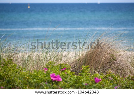 View over dune grass on the German Baltic Sea and the coast