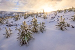 View over small evergreen trees on snowy slope with sunburst and mountain range