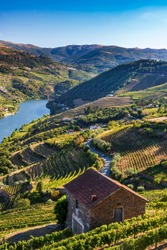 View over the Douro valley in Mesao Frio, Portugal.