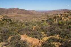 View over the Namaqualand veld in Goegap Nature Reserve, Northern Cape, South Africa, in late spring, with some of the last wildflowers of the season still in bloom,
