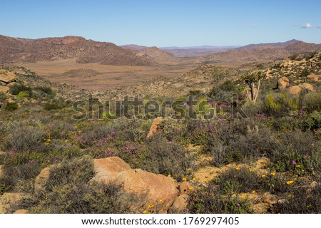 View over the Namaqualand veld in Goegap Nature Reserve, Northern Cape, South Africa, in late spring, with some of the last wildflowers of the season still in bloom, Stockfoto ©