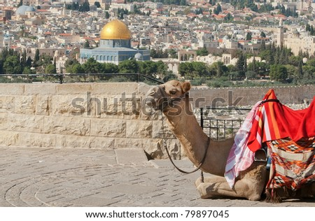 View over the Temple Mound in Jerusalem, showing The Dome of the rock with a camel in foreground