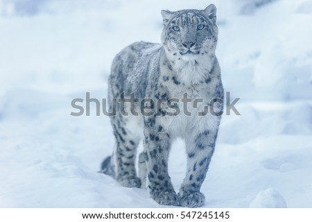 View Snow Leopard.