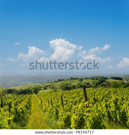 view to vineyard in Ukraine, Trans-carpathian region