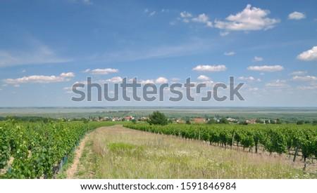 view to Wine Village of Moerbisch am See,Neusiedler See,Burgenland,Austria