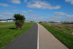 View towards Galway City, Ireland from the walking and cycle path to Salthill, with surrounding grassy fields and one tree on a sunny summer day