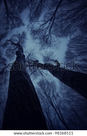 view towards the sky from a dark forest at night
