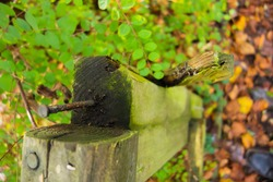 viewed from above a broken wooden hand rail with rusted and bent nails with a natural green background