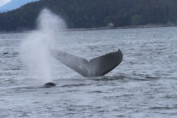 Viewing whales inside passage, Alaska