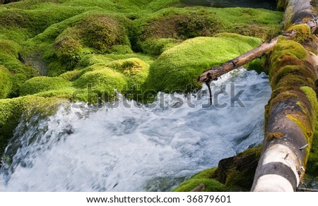 Views and moss covered stream bed at Karst Springs in Peter Lougheed Provincial Park, Kananaskis Country Alberta, Canada