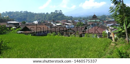 Views of green rice fields and residential areas in rural areas