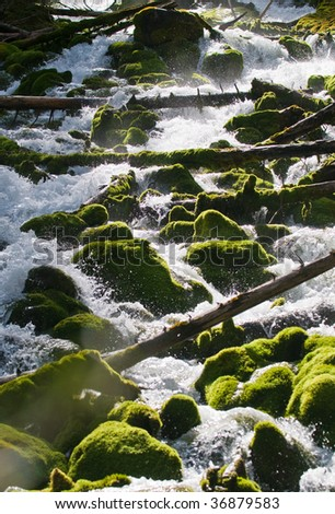 Views of moss covered stream bed at Karst Springs in Peter Lougheed Provincial Park, Kananaskis Country Alberta, Canada