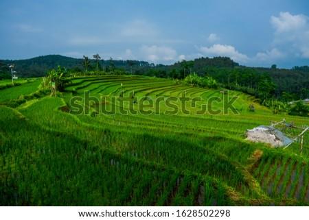 views of rice terraces in lowungu village, bejen sub-district, temanggung district, java tenga, indonesia.