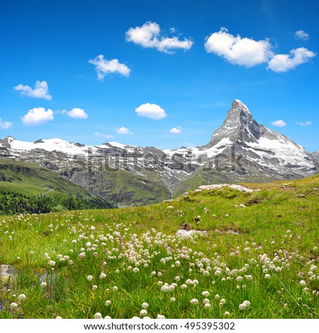 Stock Photo Views of the mountain Matterhorn with cottongrass on meadow in the foreground, Pennine alps in Switzerland.
