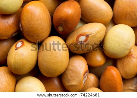 Vigna aconitifolia, called the moth bean. Matki is very popular in Maharastrian cuisine. The beans are soaked overnight to make them sprout.