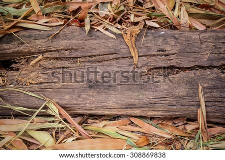 Vignette wood log and dry leaf on ground. Old wood log on ground. Grunge wood log and dry leaf. Grunge wood trunk. Grunge wooden. Rough wood and dry leaf. Old tree log. Vignette tree log. Tree log