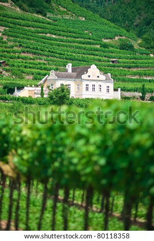 Villa in Vineyard