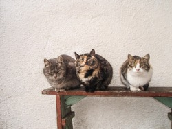 Village cats resting. Curious cat in village. Three cats sitting on bench