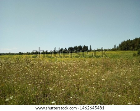 village meadow grass meadow Wallpaper #1462645481