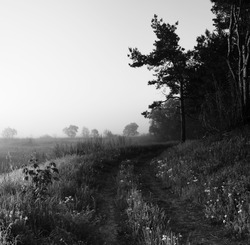 Village road and meadow in mist at dawn. Beautiful sunny dawn. Black and white photo