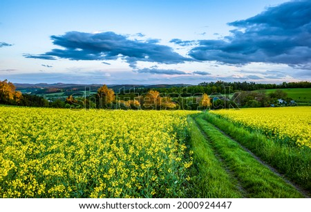 Village road through a blooming field. Summer village panorama. Rural road in village in summer