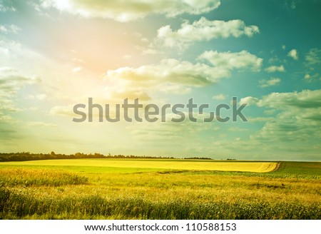 Village wheat field in abstract color
