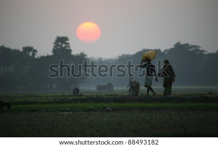 Villagers return home after a hard day on the rice fields, Sundarbans, West Bengal, India