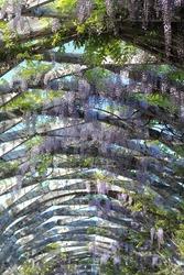 Vine corridor in Columbus Waterfront Park