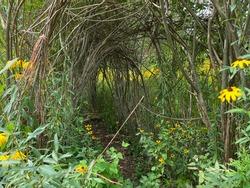 Vine Covered Archway in a Garden