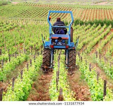 vine growers on his tractor scribbling vines             #1131877934