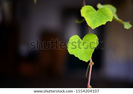 Vine leaves. Green vine leaves. #1554204107