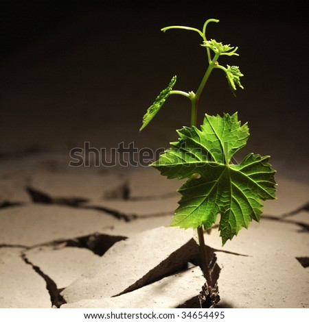 vine sprout in dry ground