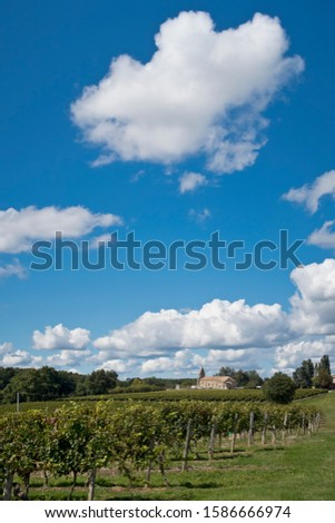 Vines in French vineyard with chateau in background and blue sky with white fluffy clouds