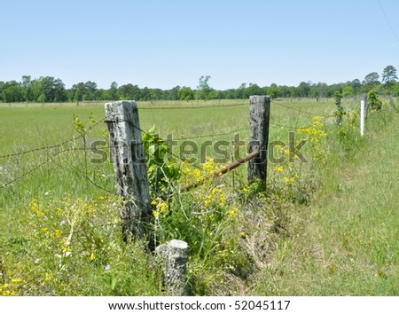 Vines on fence post in field