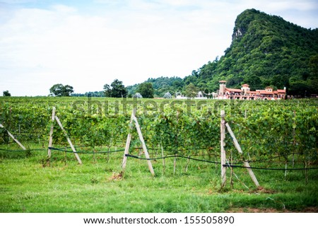 vineyard #155505890