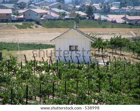 Vineyard and Shed