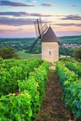 Vineyard and Windmill of Santenay, France