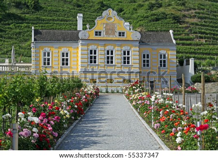 Vineyard at river Danube (Wachau, Lower Austria)